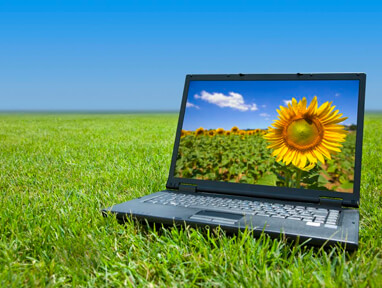 A laptop computer with an image of a sunflower on the screen, sitting in a field of grass.